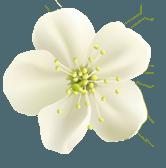 home flower1