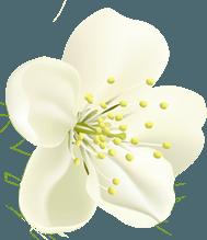 home flower2