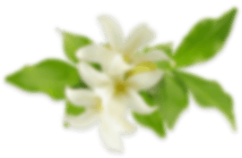 home flower3