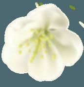 home flower4