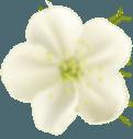 home flower5